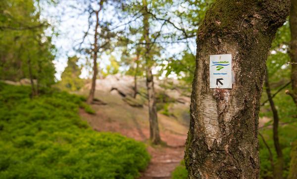 Markierungszeichen am Baum